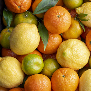 Mix of Citrus Fruits