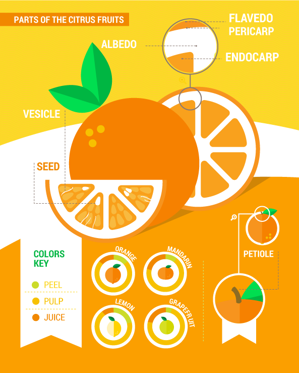 citrus fruits' endocarp
