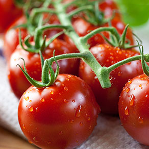 Ripen of tomatoes