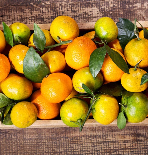 The different categories of citrus fruits