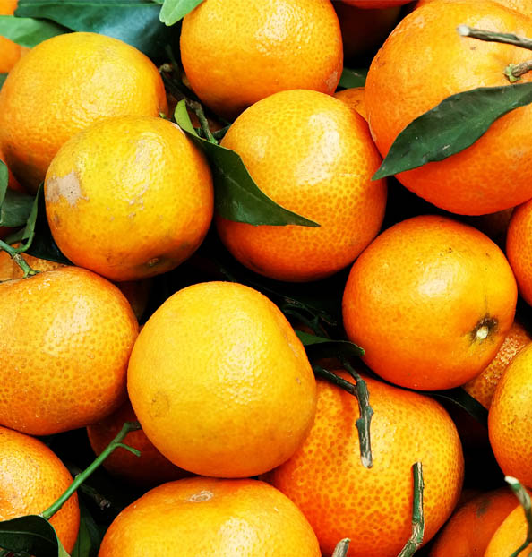 citrus fruits quality
